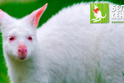 Билеты на посещение контактного зоопарка «Белый кенгуру» в «Вегас Крокус Сити» и ТРЦ «XL-3» в будни и выходные. Скидка 50%