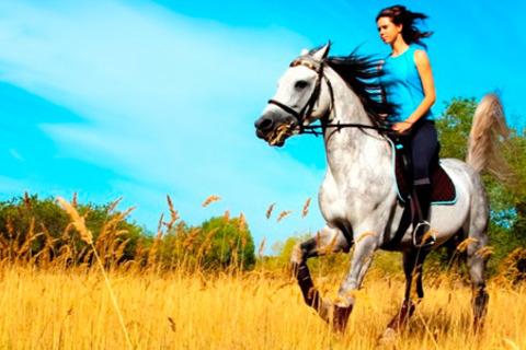 1, 4 или 8 занятий верховой ездой для одного или часовая конная прогулка в поле для двоих от конного клуба «Колос». Скидка до 55%